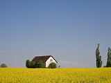 Rape Field in Franconia Photographic Print by Christa Eder