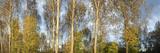 Bucher Forst Photographic Print by Gabi Wolf