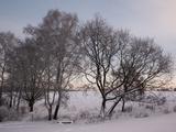 Hobrechtswald in Winter Photographic Print