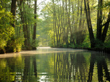 Early Morning in the Spree Forest Fotoprint van Dieter Moebus