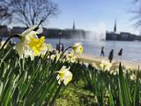 Christian Ohde - Springtime at Lake Alster in Hamburg - Fotografik Baskı