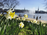 Springtime at Lake Alster in Hamburg Photographic Print