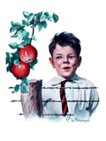 """Boy Tempted by Apples,""October 4, 1924 Giclee Print by Clarence William Anderson"