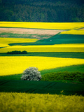 A Rural Lansdscape Near Coburg in Germany Photographic Print by Val Thoermer