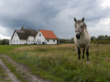 White Horse on the Pasture in Front of White Houses Photographic Print by Frank Roeder