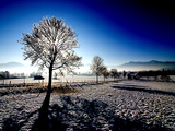 Winter in Bavaria Photographic Print by Mirko Milovanovic