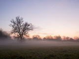 Foggy Evening Near the Elbe River Photographic Print by Oliver Borchert