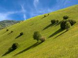 Summer Meadows in the Kaiserstuhl Mountain Range Photographic Print