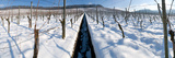 Winter in the Vineyard Photographic Print by Mirko Milovanovic