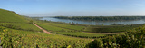 Vineyard at the River Main Photographic Print by Mirko Milovanovic