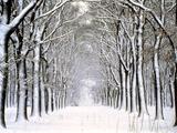 Way Through Forest in Winter Fotodruck von Guenther Essbach