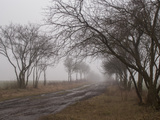 Muddy Road in the Fog at Hobrechtswald Photographic Print