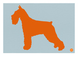 Standard Schnauzer Orange Prints by  NaxArt