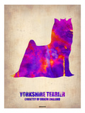 Yorkshire Terrier Poster Prints by  NaxArt