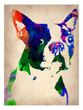 Boston Terrier Watercolor Prints by  NaxArt