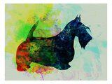 Scottish Terrier Watercolor Posters by  NaxArt