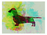 Dachshund Watercolor Posters af NaxArt