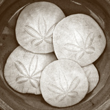 Sand Dollars - Duotone Photo by Katano Nicole