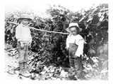 Boys with Grapes, Granger, WA, 1911 Giclee Print by Ashael Curtis