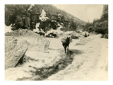 Packtrain in Box Canyon Skagway Trail, ca. 1899 Giclee Print