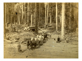 Hauling Logs, 10 Horse Teams Veazie Russell's Camp, Enumclaw, Washington (ca. 1890) Giclee Print by Edward Sather