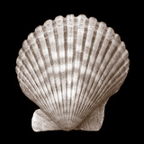 Seashell - Duotone Posters by Katano Nicole