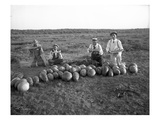 Men Eating Watermelon in Field Near Moses Lake, WA, 1911 Giclee Print by Ashael Curtis