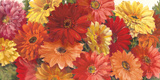 Bountiful Gerberas Crop Prints by Carol Rowan