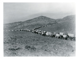 Wagon Train - Oregon Trail Wagon Train Reenactment, 1935 Giclee Print by Ashael Curtis