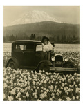 Daffodil Field, Automobile and Mount Rainier, ca. 1929 Giclee Print by Marvin Boland