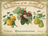 Fruits Of The Garden Tin Sign