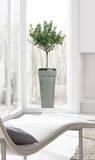 Olivenbaum Fensteraufkleber