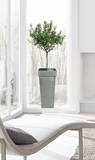 Olive Tree Decalque em parede por . Design Team