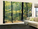 Enchanted Forest Huge Wall Mural Poster Print Wall Mural