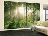 Birch Glory Huge Wall Mural Poster Print Wall Mural
