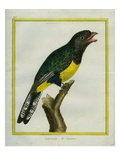 Green-Backed Trogon Giclee Print by Georges-Louis Buffon