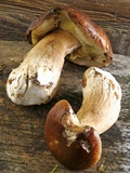 Two Fresh Porcini Mushroom on a Wooden Surface Photographic Print by Jean-Paul Chassenet
