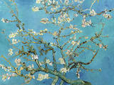 Branches d&#39;Amandier en Fleurs, 1890 Posters par Vincent van Gogh