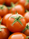 Fresh Tomatoes Photographic Print by Greg Elms