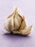 Garlic Bulb Photographic Print by John Hay