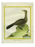 Brown Booby Giclee Print by Georges-Louis Buffon