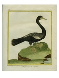 Black Anhinga Giclee Print by Georges-Louis Buffon