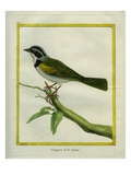 Palm Tanager Giclee Print by Georges-Louis Buffon