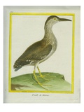 Female Night Heron Giclee Print by Georges-Louis Buffon
