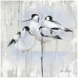 3 Oiseaux Posters by Pascal Cessou