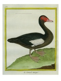 Muscovy Duck Giclee Print by Georges-Louis Buffon