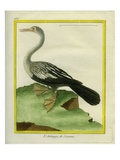 Anhinga Giclee Print by Georges-Louis Buffon