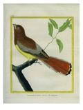 Black-Throated Trogon Giclee Print by Georges-Louis Buffon