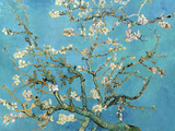 Vincent van Gogh - Çiçekli Badem Dalları, San Remy, c.1890 (Almond Branches in Bloom, San Remy, c.1890) - Reprodüksiyon