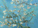 Rami di mandorlo in fiore, San Remy, 1890 circa Stampe di Vincent van Gogh